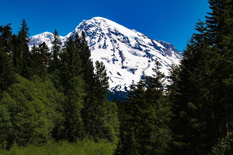 Mt. Rainier at Kautz Creek