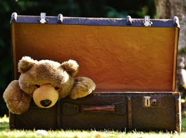 Bear in suitcase