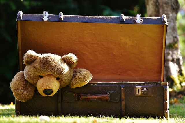 bear in a suitcase