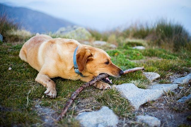 Dog at Mount Rainier